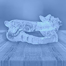 Sleep apnea appliance blue highlight